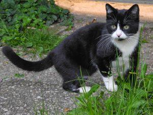 comment adopter un chat abandonné