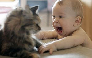 Bébé et Chat