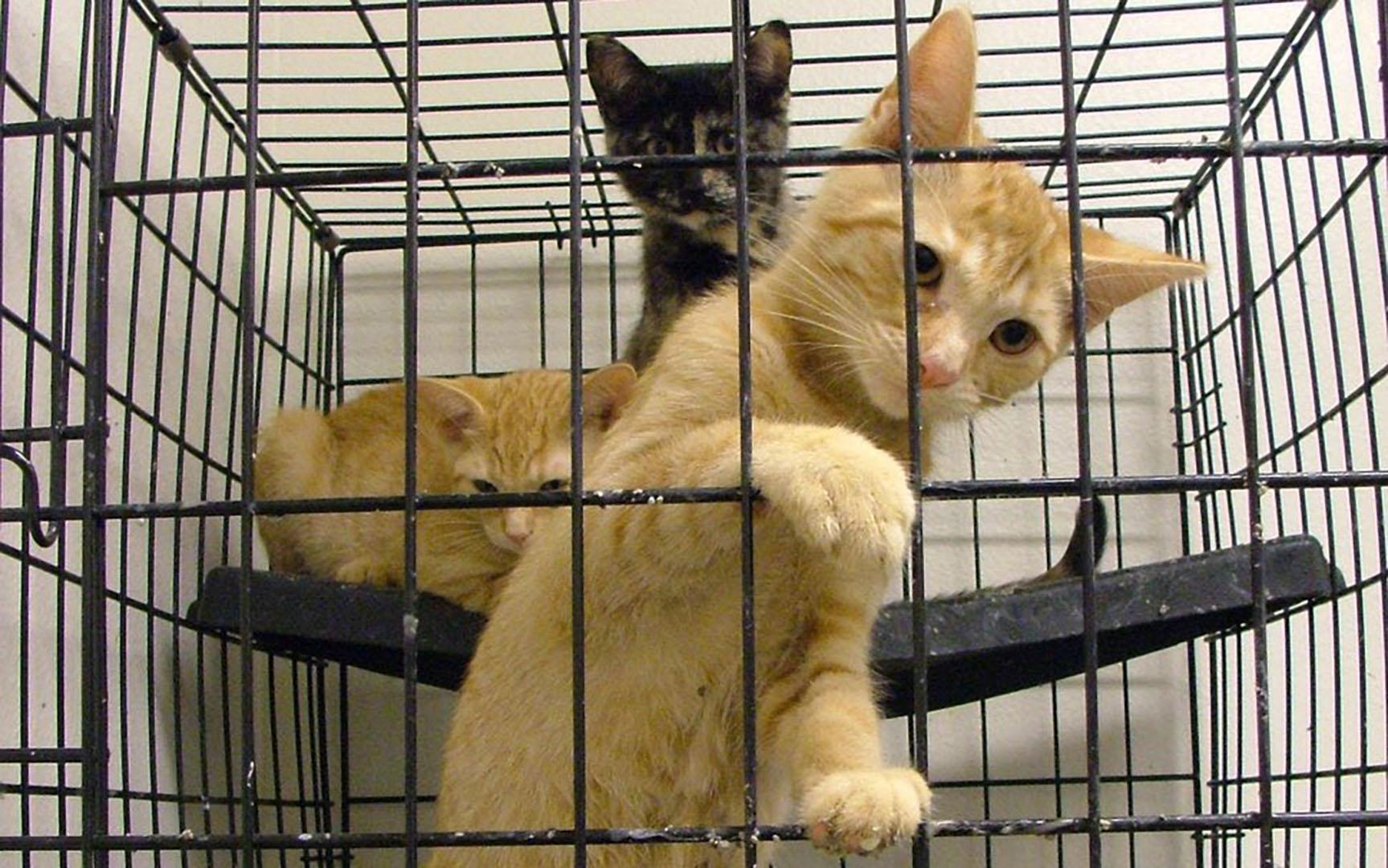 Animalerie chat