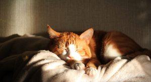 dormir avec son chat