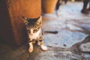 type de chaton