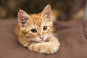 choisir un chaton en bonne santé
