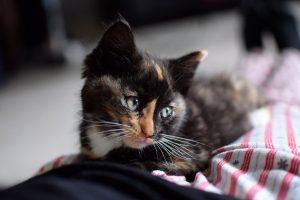convaincre ses parents d'avoir un chat