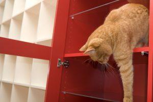 les dangers de la maison pour chat