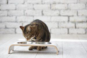 tout savoir autour de la gamelle pour chat