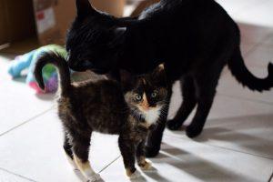 introduire un nouveau chat