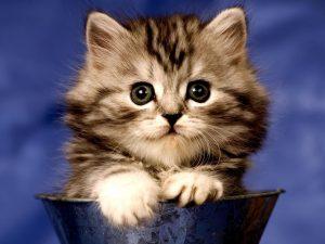 Où acheter chat