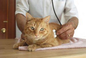 l'assurance pour votre chat