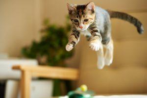 les besoins énergétiques du chat