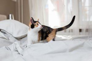 les chats malpropres : raisons et solutions