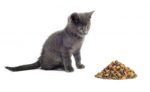 Comment mange le chat ?