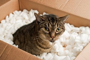 Déménager un chat d'une maison à un appartement