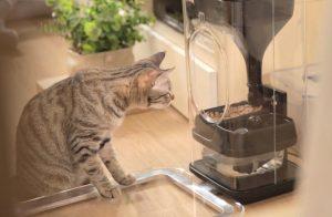 Tout savoir sur le distributeur pour chat