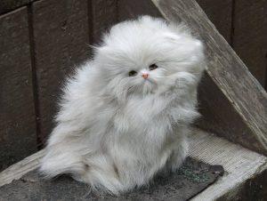 Entretenir les poils de son chat