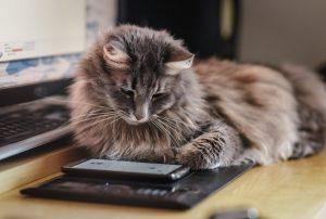 L'intelligence du chat