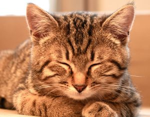 pourquoi mon chat dort en permanence ?