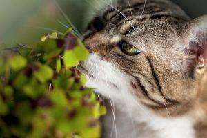 pourquoi les chats mangent des plantes