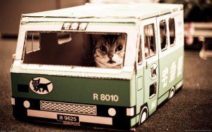 comment voyager avec son chat dans un bus ou car