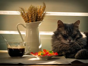 Quelle alimentation idéale pour le chat