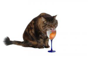 boisson pour chat