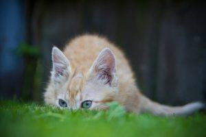 chaton apprend à chasser