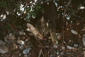 chat qui gratte le sol