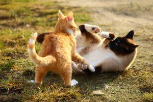solution aux chats qui se battent