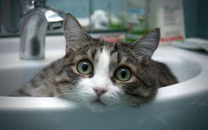 laver ou toiletter son chat