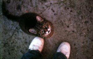 chat qui se frotte