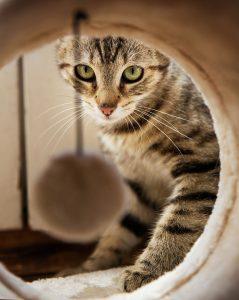 jeux du chaton