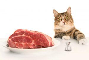 Ce que j'aime manger le chat