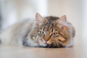 la solitude chez le chat