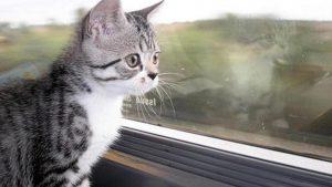 comment voyager en train avec votre chat ?
