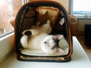 formalités administratives pour le voyage de votre chat