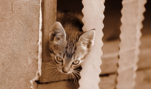 La cage pour chat
