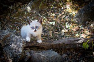 chat d'extérieur