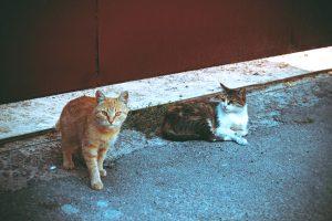 chats mâle et femelle
