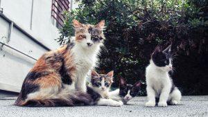 développement des chatons