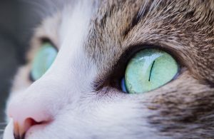 les examens médicaux du chat