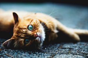 comment soigner un chat malade