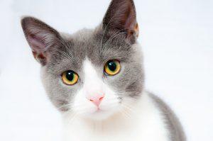 les soins quotidiens du chat