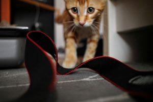 tout savoir sur le voyage avec un chat en avion
