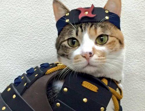 Une entreprise crée des armures de samouraï pour chats