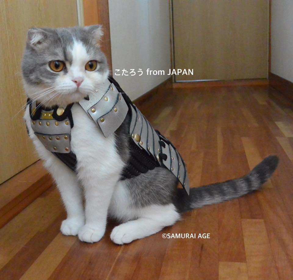 armure de samouraï pour chat
